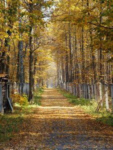 Free Golden Autumn Royalty Free Stock Image - 9426466