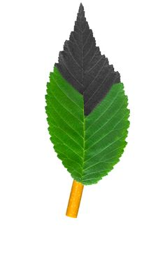 Free Cigarette And Green Leaves Stock Images - 9426994