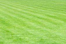 Free Grass Royalty Free Stock Photos - 9428328