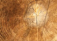 Free The Old Brown Cracked Stump. Stock Photo - 9428480