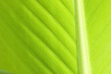 Free Leaf Stock Photography - 9428602