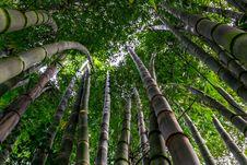 Free Bamboo Trees Stock Image - 94243911