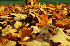 Free Autumn Leaves On Ground Stock Image - 94243991