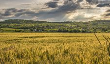 Free Cereal Crop In Agricultural Landscape Stock Photo - 94244360