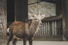 Free Deer In Petting Zoo Stock Image - 94244401