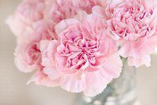 Free Flower, Pink, Flowering Plant, Peony Stock Image - 94246261