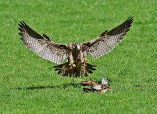 Free Bird, Fauna, Ecosystem, Bird Of Prey Stock Photography - 94246312