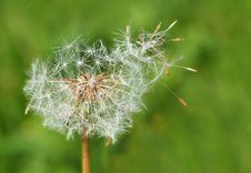 Free Dandelion, Flora, Vegetation, Flower Stock Photography - 94247322