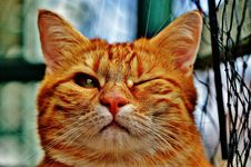 Free Cat, Whiskers, Small To Medium Sized Cats, Fauna Royalty Free Stock Photos - 94247388