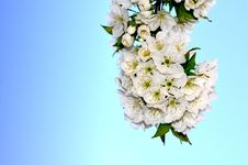 Free Flower, Flower Bouquet, Lilac, Blossom Stock Photo - 94247740