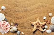 Free Seashell, Conchology, Sand, Material Royalty Free Stock Images - 94247769