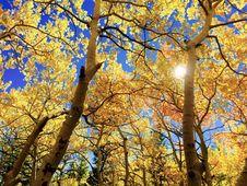 Free Nature, Tree, Yellow, Autumn Stock Photos - 94248763