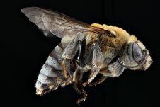 Free Insect, Honey Bee, Bee, Invertebrate Stock Photos - 94248823