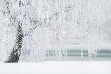 Free Water, Freezing, Winter, Tree Royalty Free Stock Image - 94250866