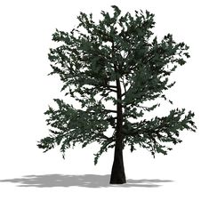 3D Render Of A Needle Beam Tree Stock Photos