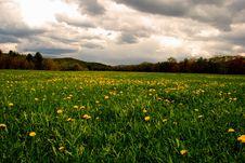 Free Field Of Dandelions Stock Photo - 9430490