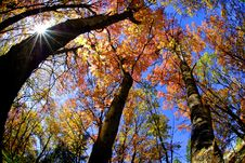 Free Fall Trees Stock Image - 9430941