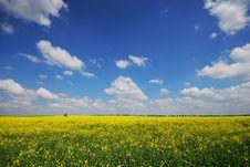 Free Summer Fields Stock Photos - 9432653