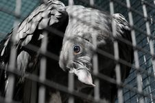 Free Vulture Stock Photography - 9432932