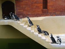 Free Penguins Go Home Stock Image - 9434101