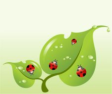 Red Ladybirds Stock Images