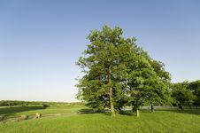 Blue Sky And Big Trees Royalty Free Stock Photos