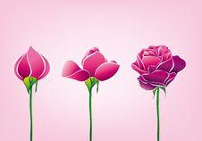 Free Rose Stock Photos - 9435323