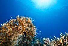 Free Ocean, Sun And Fish Stock Photo - 9435710