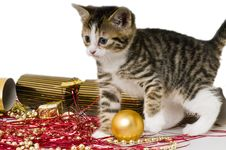Free Bengal Kitten Playing With Christmas Decorations Royalty Free Stock Photo - 9435865