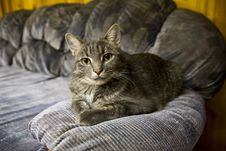 Cat On Couch Royalty Free Stock Image