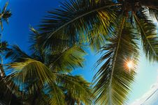 Free Vacation Is In Tropics Royalty Free Stock Photography - 9439367