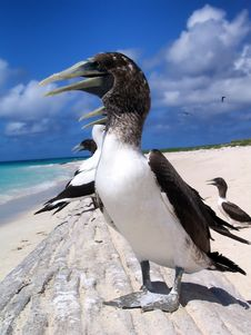 Free Bird, Fauna, Seabird, Beak Stock Photos - 94321303