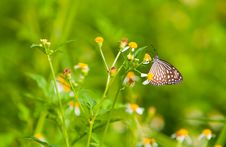 Free Butterfly Feeding Daisies Royalty Free Stock Photos - 9441138