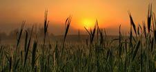 Free Sunrise On Foggy Morning Royalty Free Stock Photo - 9441195