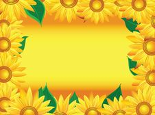 Free Sunflower Background Stock Photo - 9441520