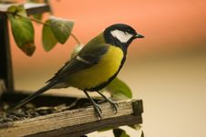 Free Titmouse Royalty Free Stock Photography - 9442207
