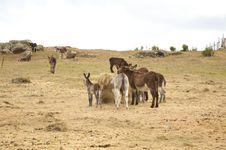 Free Big Group Of Donkeys Stock Images - 9442634
