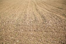 Free Brown Field Detail Royalty Free Stock Image - 9442676