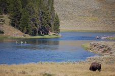 Free Yellowstone Bison And Fishermen Stock Image - 9443011