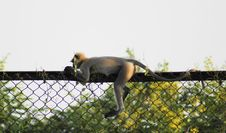 Free Monkey In An Unique Pose Royalty Free Stock Image - 9444746