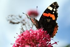 Free Butterfly Stock Images - 9444974