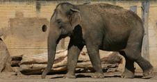 Free Elephant Stock Photography - 9447612