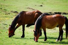 Free Horses Stock Images - 9448584