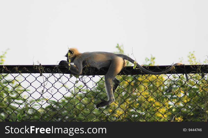 Monkey in an unique pose