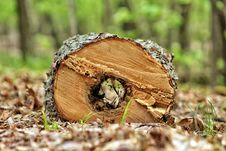 Free Hollow Log Stock Images - 94484274