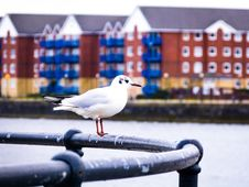 Free Seagull On Railing Along Waterfront Royalty Free Stock Photo - 94484355