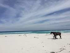 Free Southafrica-Cape Town-Beach Royalty Free Stock Photo - 94484495