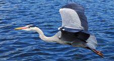 Free Bird, Water, Beak, Seabird Stock Images - 94494874