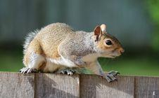 Free Squirrel, Fauna, Mammal, Chipmunk Royalty Free Stock Photos - 94494938