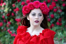 Free Flower, Red, Rose Family, Beauty Royalty Free Stock Image - 94495446